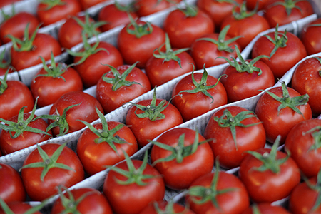 Türkiyə ilk pomidor partiyasını Rusiyaya yolladı
