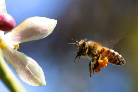 Qatil arıları necə tanıyaq?