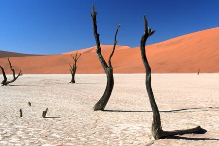 Namibiyada quraqlığa görə fövqəladə vəziyyət elan olunub