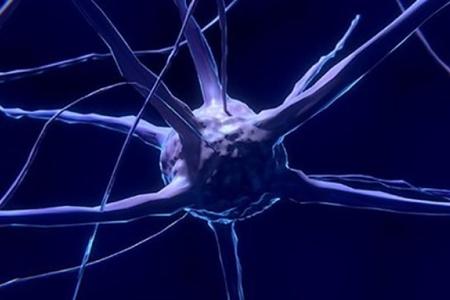 Amerika alimləri üç ölçülü canlı beyin hüceyrə modeli yaradıblar