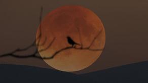 """Sabah XXI əsrin ən uzun """"Qanlı Ay"""" tutulması hadisəsi baş verəcək"""