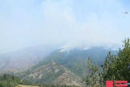 Zaqatalada dağlıq ərazidə meşə yanır