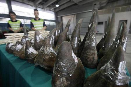 Malayziyada tarixdə ən böyük kərgədan buynuzu qaçaqmalçılığının qarşısı alınıb