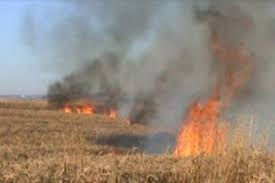 Masallıda 7 hektar biçilmiş taxıl sahəsi yandı
