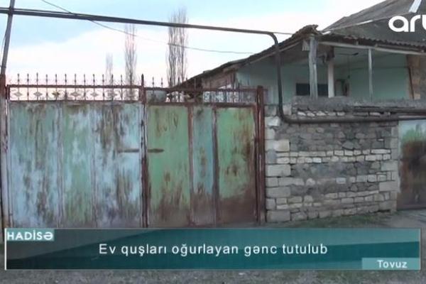 Tovuzda ev quşları oğurlayan gənc saxlanıldı - VİDEO