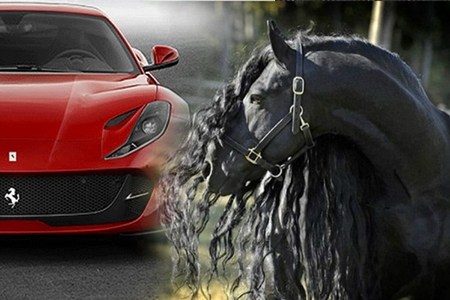 """Dünyanın ən bahalı və yaraşıqlı atları: Bir at 600 ədəd """"Ferrari"""" dəyərindədir- FOTOLAR"""
