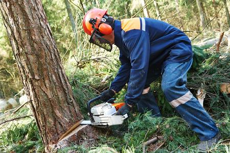 Ağacların kəsilməsi ilə bağlı ən çox şikayət edilən rayonların adları açıqlanıb