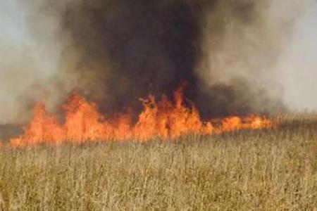 Göyçayda hektarlarla taxıl sahəsi yanıb