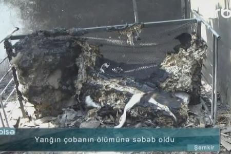 Şəmkirdə DƏHŞƏT - Çoban fermada yandı - VİDEO