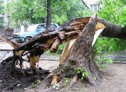 Bakıda güclü külək 20-yə yaxın ağacı aşırıb