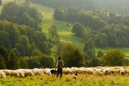 Göygöldə çoban itkin düşdü